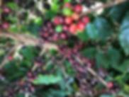 Coffee Farm Plants.png