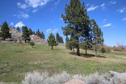 lot 5 pasture