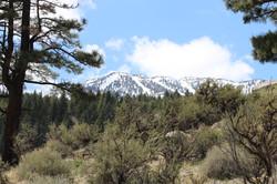 Mt Rose View