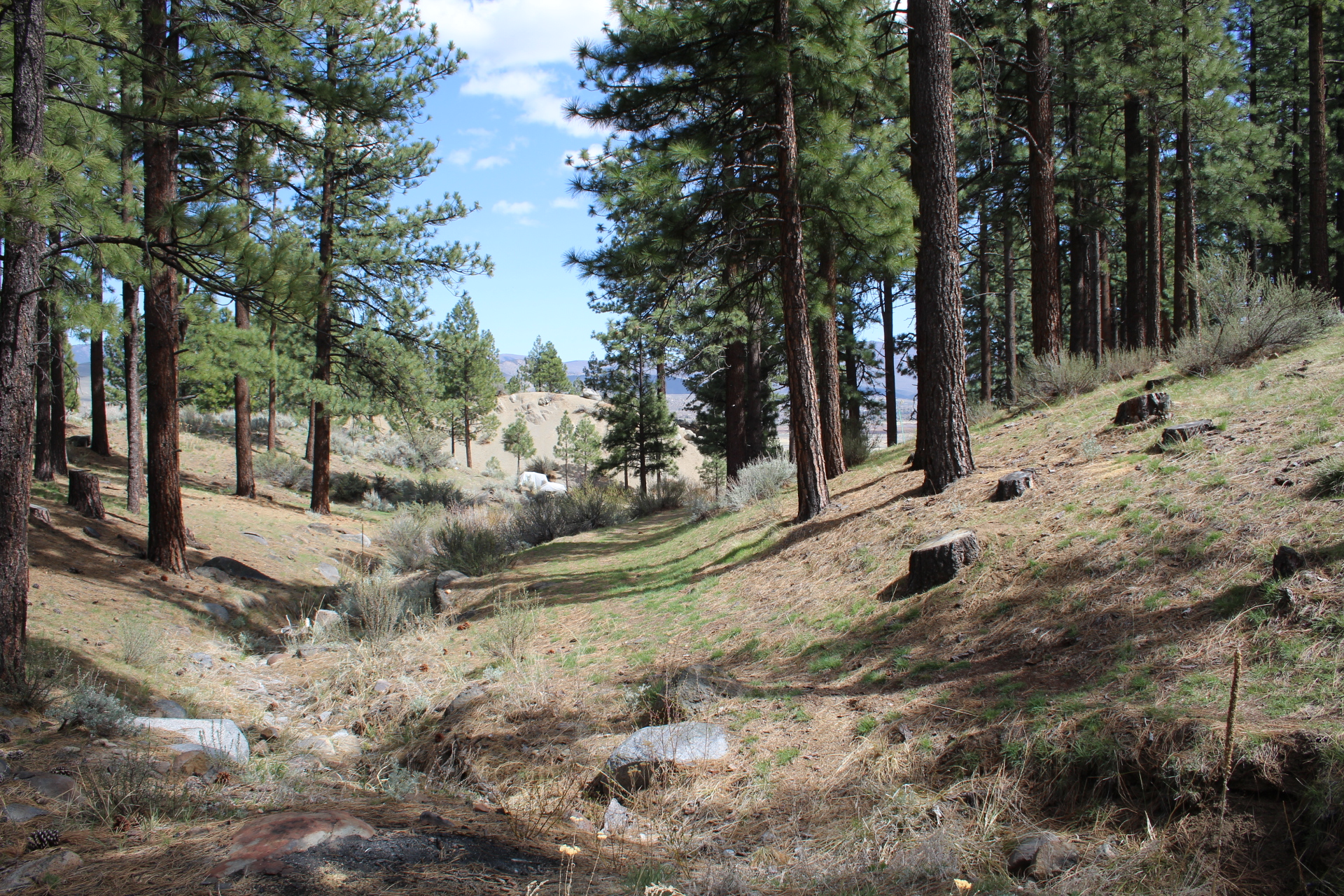 lot 2 trees