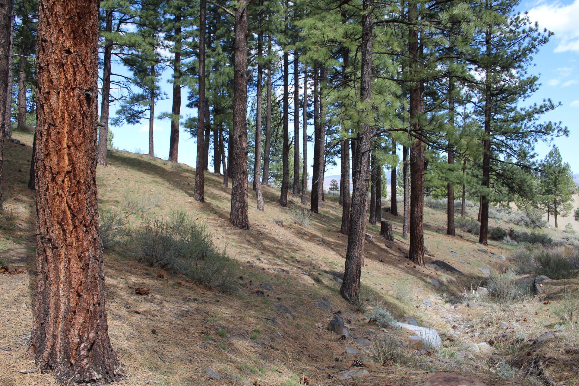 lot 3 trees