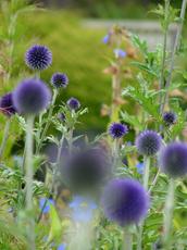 Mendocino Garden, CA
