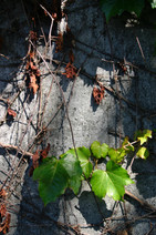 Bellevue Wall, WA