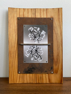Joshua Tree Mirror.jpg