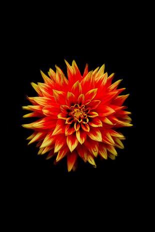Mendocino Flower, CA
