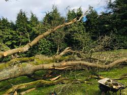 SPW_Tree Down