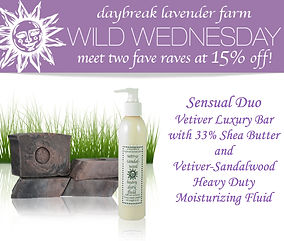Daybreak Lavender Farm vetiver email design