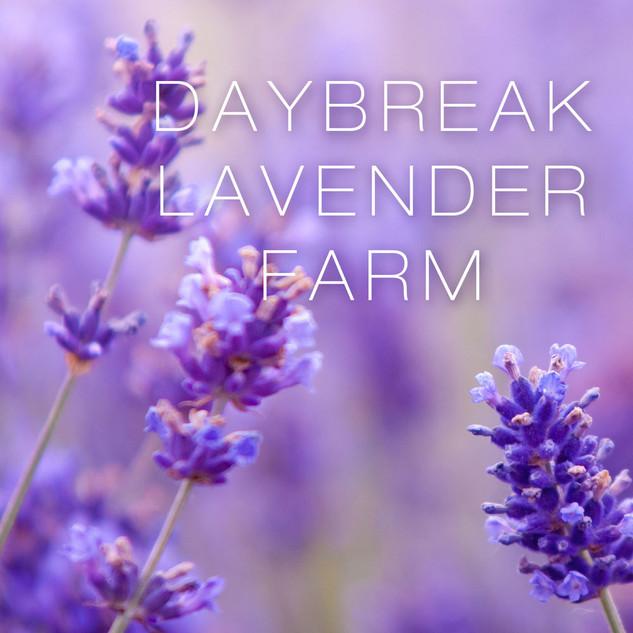 Daybreak Lavender Farm Email Campaign Design