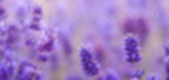 Daybreak Lavender Farm photo
