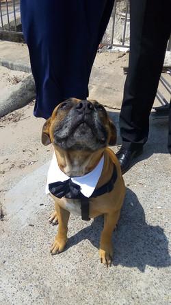 King the Dog of Honour.jpg