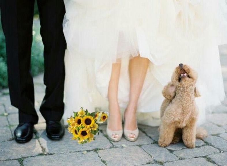 Unique Marriage Ceremonies with Celebrant Angie Dand