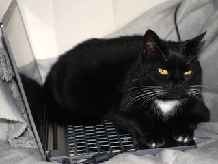 Take Your Internet Back From the Cats