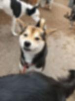 smiling dog - Copy.jpg