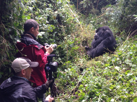 Photographing the gorillas