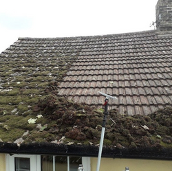 roof moss gone of roof