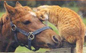 cat-and-horse-717629.jpg
