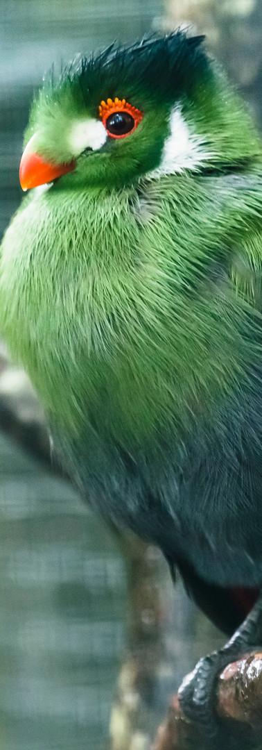 Dartmoor Zoo (9 of 11).jpg