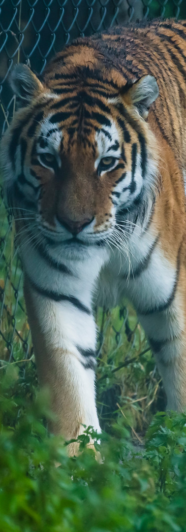 Dartmoor Zoo (6 of 11).jpg
