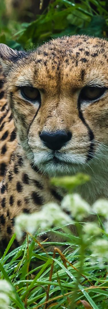Dartmoor Zoo (3 of 11).jpg