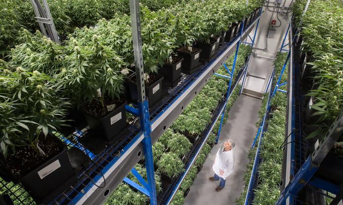 Cannabis Real Estate in California