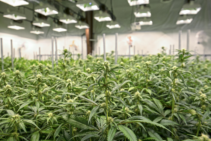 Impact of Recreational Marijuana's Legalization on Denver Industrial Real Estate Market Continue
