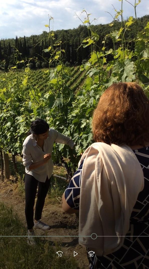 Explicações sobre a poda dos vinhedos no Castelo de Albola em Radda in Chianti