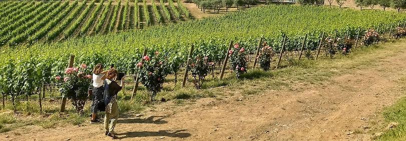 Vinhedos da Toscana