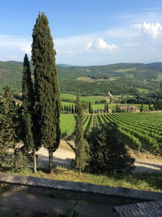 Vinhedos que pertencem ao Castelo de Albola, em Radda in Chianti