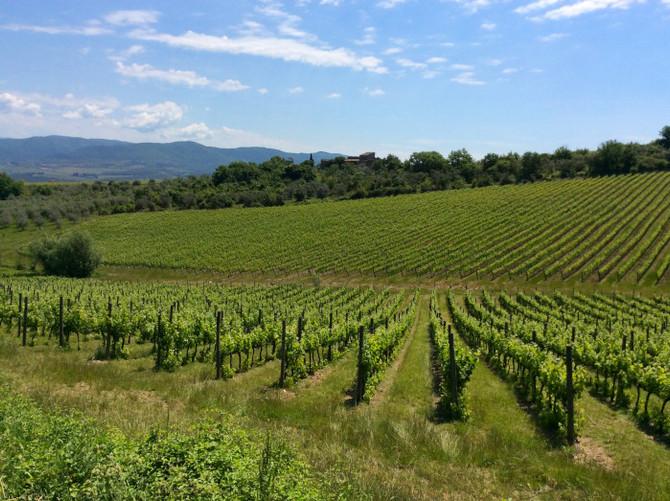 Tour na Toscana: Degustação de vinhos no Castelo de Albola