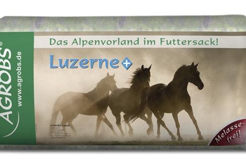 AGROB Luzerne+ [Alfalfa]