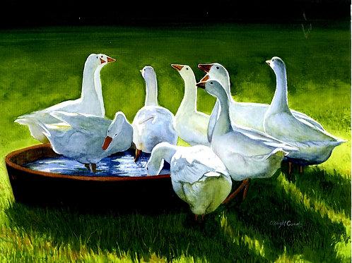 Bath Time Geese
