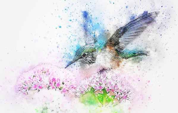 bird-2573779_1920_edited.jpg