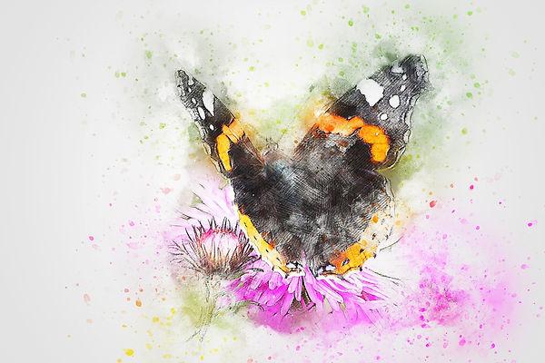 butterfly-2605702_1920_edited.jpg