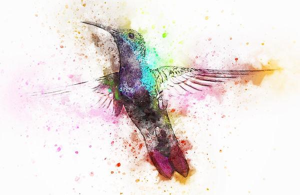 bird-2622395_1920_edited.jpg