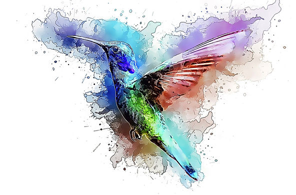 hummingbird-3518898_1920_edited.jpg