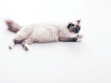 Kedim neden kusuyor ?