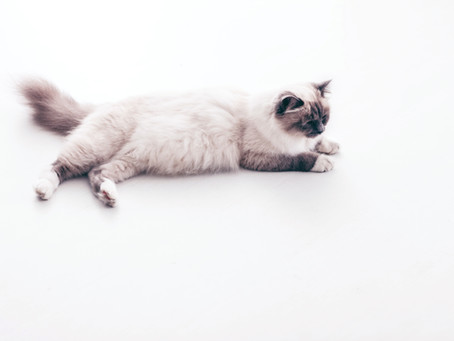 Tips for having a Zero Waste Cat