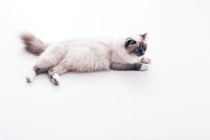 Cat Лежа