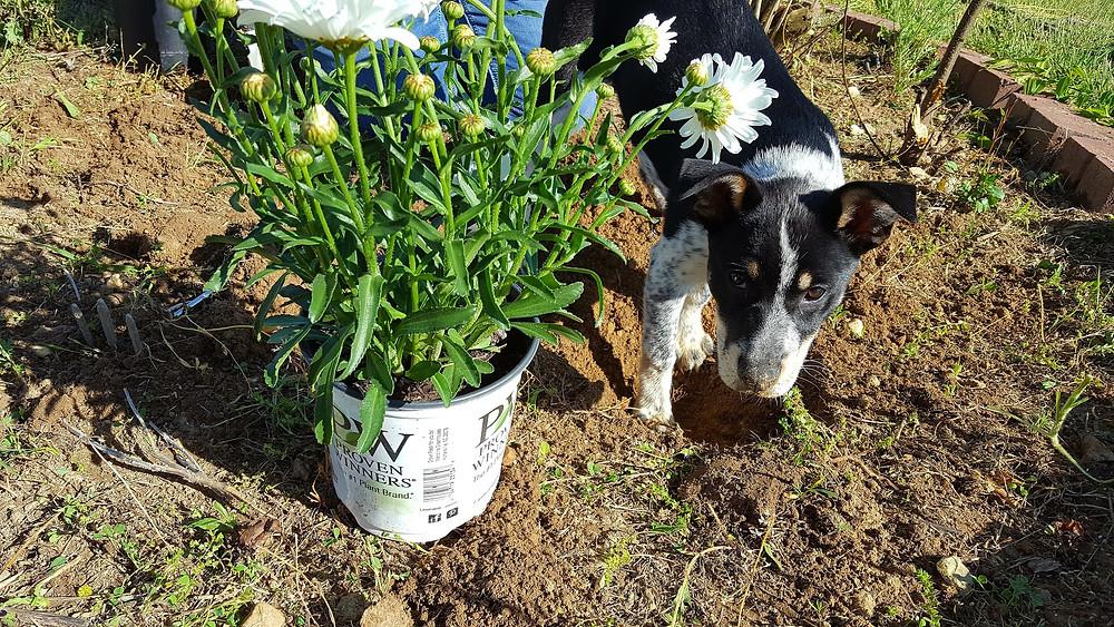 Millie the Gardener