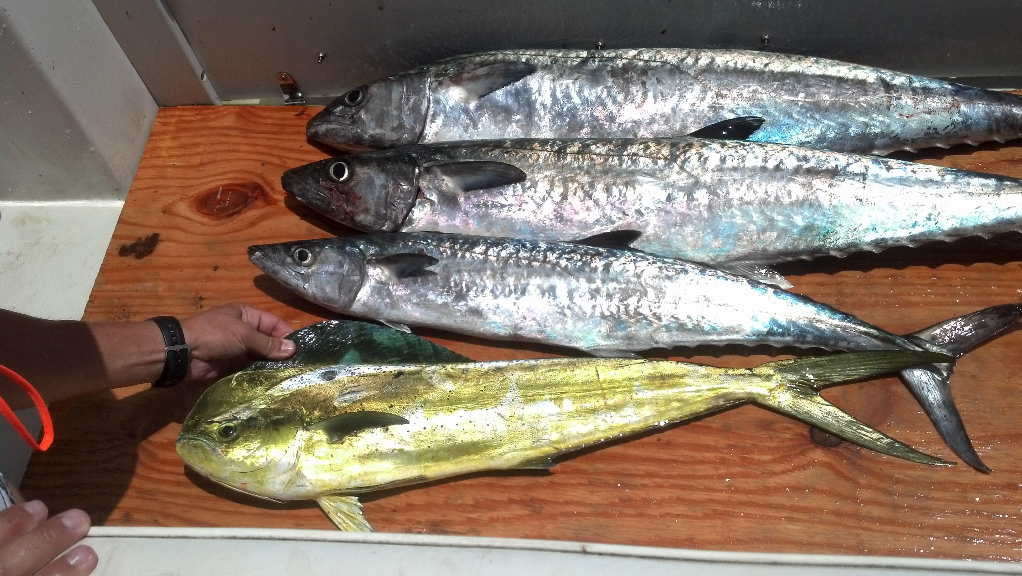 littleriversportfishing04