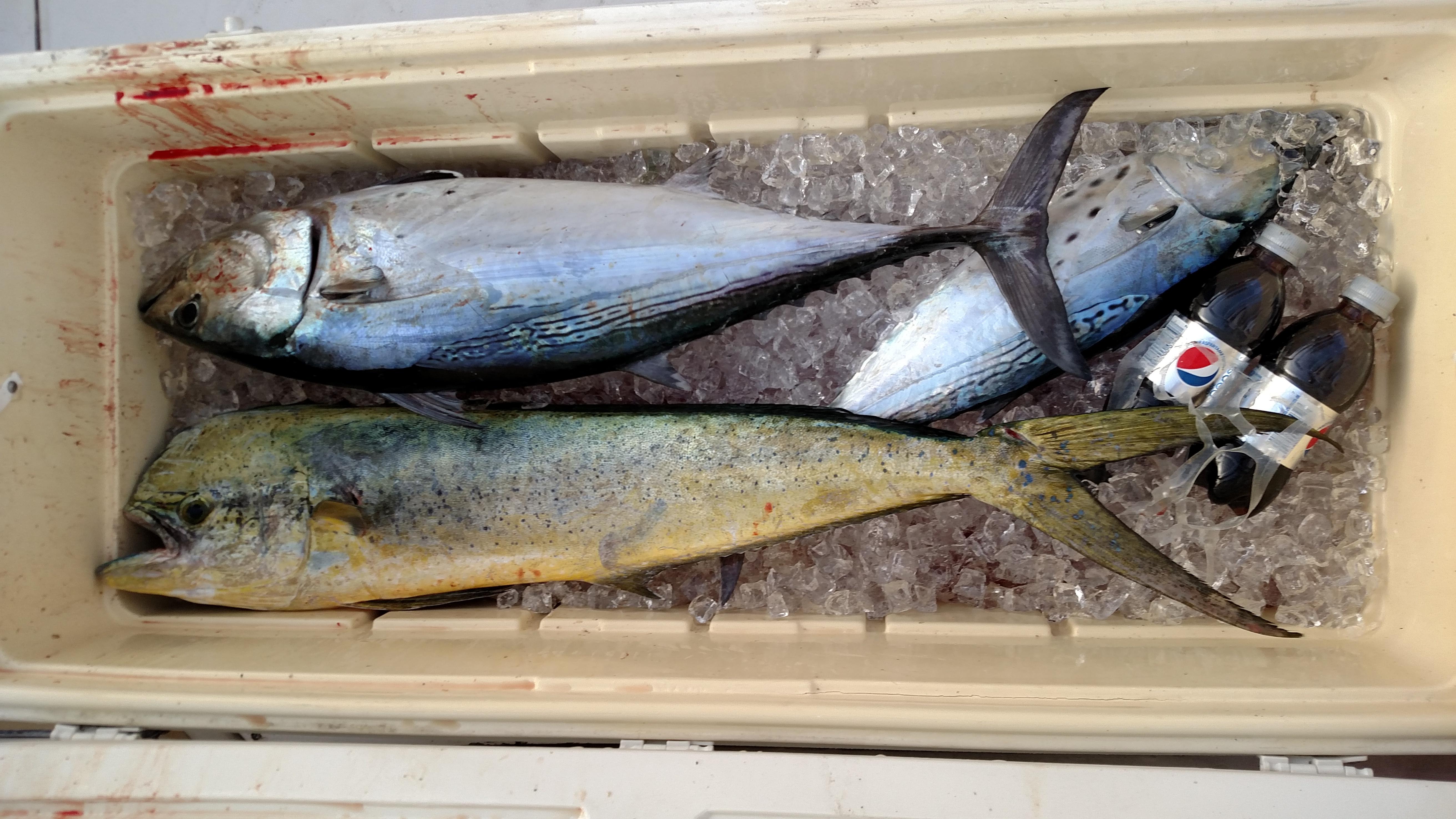 littleriversportfishing17