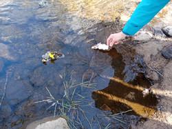radeaux fleuris déposés sur le ruisseau