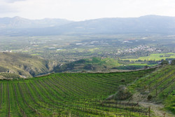 Explore Cretan Vineyards