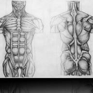 Anatomy Study - Graphite