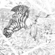 Zebra - Graphite Drawing