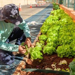 Horta Comunitária do JK Shopping realiza distribuição de hortaliças para projeto social