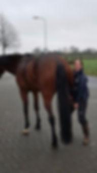 Paardendierenarts Hilde Schilings
