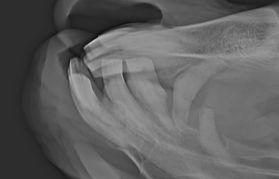 Röntgenfoto paard met EOTRH