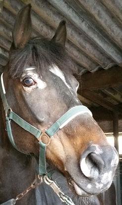 Equine vitiligo