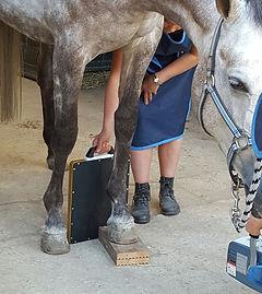 Röntgen foto paard
